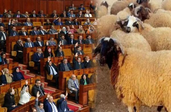 هاالكلام .. 200 مليون سنتيم لشراء أضاحي العيد لموظفي البرلمان